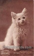 cat002096 - Snowball CE Bullard Postcard Post Card