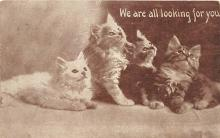 cat002110 - Cat Post Card Old Vintage Antique