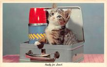 cat002117 - Cat Post Card Old Vintage Antique