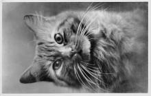 cat002131 - Cat Post Card Old Vintage Antique