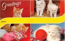 cat002138 - Cat Post Card Old Vintage Antique