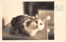 cat002139 - Cat Post Card Old Vintage Antique