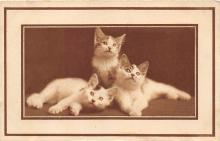 cat002153 - Cat Post Card Old Vintage Antique