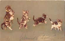 cat002158 - Cat Post Card Old Vintage Antique