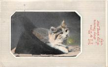 cat002163 - Cat Post Card Old Vintage Antique