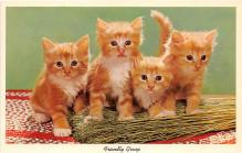 cat002165 - Cat Post Card Old Vintage Antique