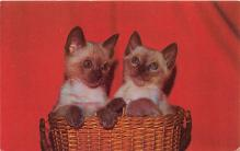 cat002178 - Cat Post Card Old Vintage Antique
