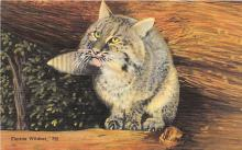 cat002186 - Cat Post Card Old Vintage Antique