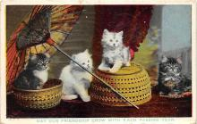 cat002187 - Cat Post Card Old Vintage Antique