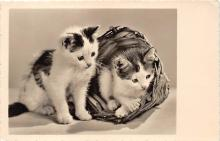 cat002189 - Cat Post Card Old Vintage Antique