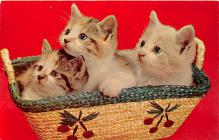 cat002195 - Cat Post Card Old Vintage Antique