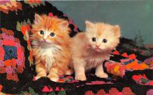 cat002196 - Cat Post Card Old Vintage Antique