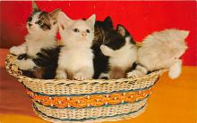 cat002197 - Cat Post Card Old Vintage Antique