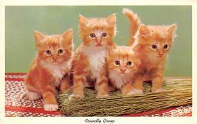 cat002202 - Cat Post Card Old Vintage Antique
