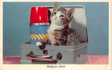 cat002203 - Cat Post Card Old Vintage Antique