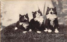 cat002208 - Cat Post Card Old Vintage Antique