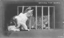 cat002224 - Cat Post Card Old Vintage Antique