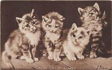 cat002234 - Cat Post Card Old Vintage Antique