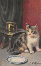 cat002237 - Cat Post Card Old Vintage Antique