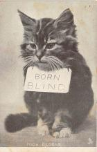 cat002238 - Cat Post Card Old Vintage Antique