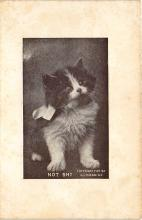 cat002241 - Cat Post Card Old Vintage Antique