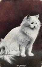 cat002242 - Cat Post Card Old Vintage Antique