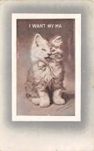 cat002243 - Cat Post Card Old Vintage Antique
