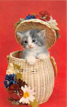cat002244 - Cat Post Card Old Vintage Antique