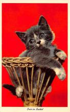 cat002245 - Cat Post Card Old Vintage Antique