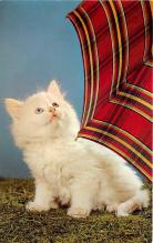 cat002248 - Cat Post Card Old Vintage Antique