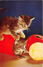 cat002254 - Cat Post Card Old Vintage Antique