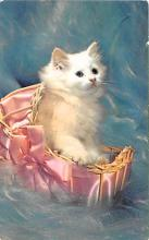 cat002258 - Cat Post Card Old Vintage Antique