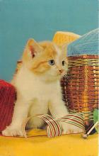 cat002265 - Cat Post Card Old Vintage Antique