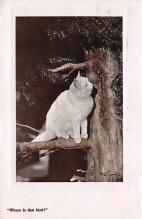 cat002276 - Cat Post Card Old Vintage Antique