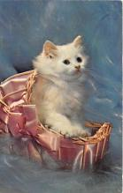 cat002279 - Cat Post Card Old Vintage Antique