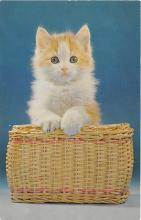 cat002286 - Cat Post Card Old Vintage Antique