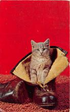 cat002288 - Cat Post Card Old Vintage Antique