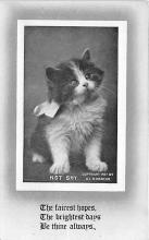 cat002290 - Cat Post Card Old Vintage Antique
