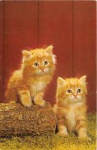 cat002292 - Cat Post Card Old Vintage Antique