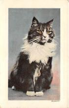cat002320 - Cat Post Card Old Vintage Antique