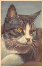 cat002324 - Cat Post Card Old Vintage Antique