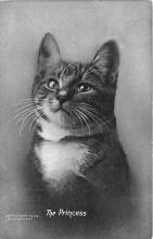 cat002330 - Cat Post Card Old Vintage Antique