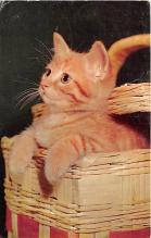 cat002340 - Cat Post Card Old Vintage Antique