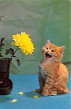 cat002342 - Cat Post Card Old Vintage Antique