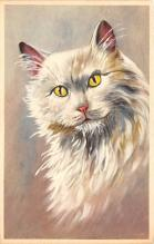 cat002352 - Cat Post Card Old Vintage Antique