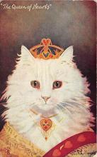 cat002354 - Cat Post Card Old Vintage Antique