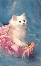 cat002363 - Cat Post Card Old Vintage Antique