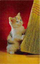 cat002365 - Cat Post Card Old Vintage Antique