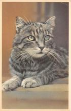 cat002376 - Cat Post Card Old Vintage Antique