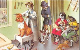 cat254425 - Cat Post Card Old Vintage Antique